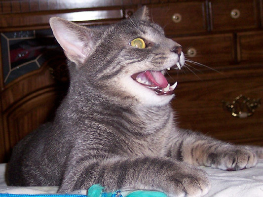 ... , Baby Cat, Cubby N4DRR, Squeaker KD5TM Universal Radio Customer Cats