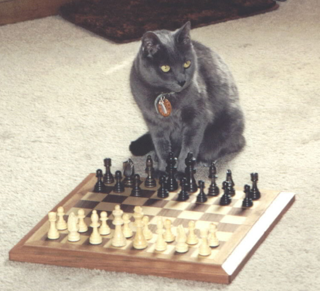 Chess Cats