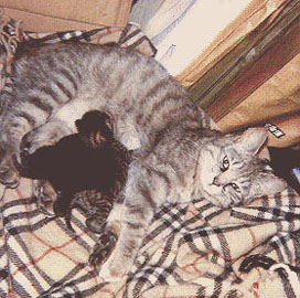 New Mom & Two Kittens